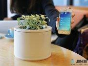 سنسور هوشمند نظارت بر گل و گیاه شیائومی Xiaomi Smart Plants Monitor