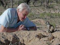 Attenborough's Story of Life برنامه ای برای دوستداران حیات وحش