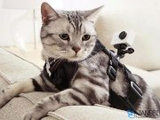 بند نصب دوربین روی حیوانات خانگی XiaoYi Pet Mount Small