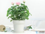 گلدان هوشمند شیائومی Flowerpot