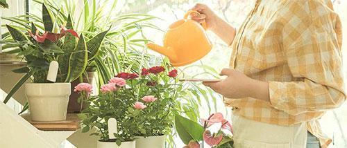 نظارت هوشمند گل و گیاه شیائومی Xiaomi Smart Plants Monitor