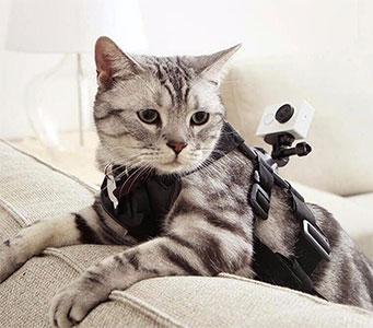 بند نصب دوربین روی حیوانات خانگی XiaoYi Pet Mount Big